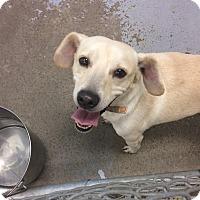 Adopt A Pet :: Andy Murray - Jersey City, NJ