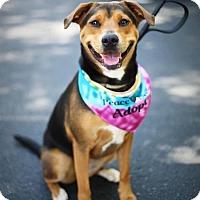 Adopt A Pet :: Ember - Alpharetta, GA