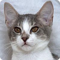 Adopt A Pet :: Winter W - Sacramento, CA