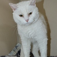 Adopt A Pet :: Lori - Pueblo West, CO
