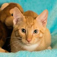 Adopt A Pet :: Charlie - Santa Fe, TX