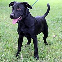 Adopt A Pet :: Beast - Southbury, CT