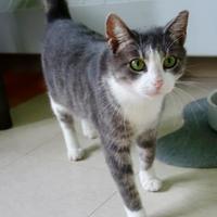Adopt A Pet :: Betsy - Westampton, NJ