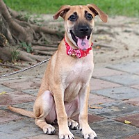 Adopt A Pet :: Charissa - Castro Valley, CA