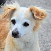 Adopt A Pet :: Rufus - Georgetown, TX