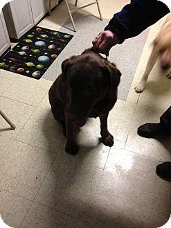 Labrador Retriever Mix Dog for adoption in North Pole, Alaska - Bo