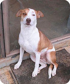 Hound (Unknown Type)/Terrier (Unknown Type, Medium) Mix Dog for adoption in Washington, D.C. - Eliza Peaches