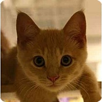 Adopt A Pet :: Zack - Jenkintown, PA