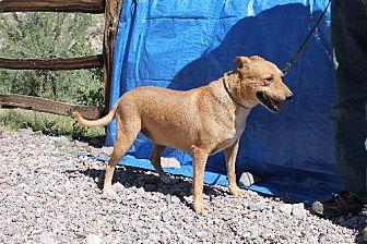 Shar Pei Mix Dog for adoption in Golden Valley, Arizona - Cayenne