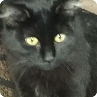Adopt A Pet :: Jewel - Delmont, PA