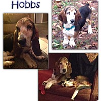 Adopt A Pet :: Hobbs - Marietta, GA