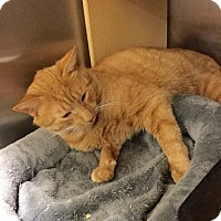 Adopt A Pet :: Sunny Boy - Colmar, PA