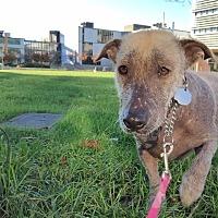 Adopt A Pet :: Oso - Vancouver, BC