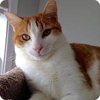 Adopt A Pet :: Elvis - Colmar, PA