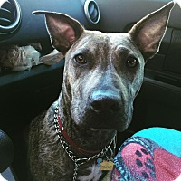 Adopt A Pet :: Jackie - Las Vegas, NV