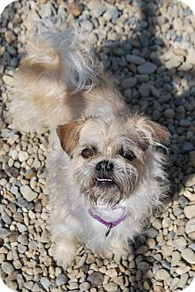 Terrier (Unknown Type, Small) Mix Dog for adoption in Berea, Ohio - Bexley