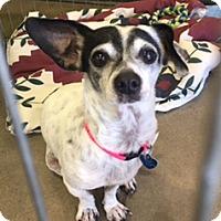 Adopt A Pet :: Gretel - Lake Elsinore, CA
