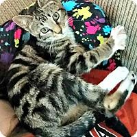 Adopt A Pet :: Willow - Chesapeake, VA