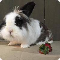 Adopt A Pet :: Buster - Conshohocken, PA