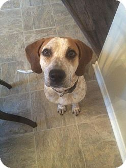 Redtick Coonhound Mix Dog for adoption in St. Catharines, Ontario - Lily