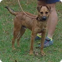 Adopt A Pet :: Piney - Jefferson, TX