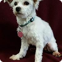 Adopt A Pet :: Jersey Miller - Urbana, OH
