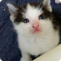 Adopt A Pet :: Kendra - Austintown, OH