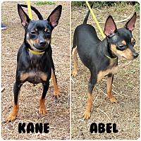 Adopt A Pet :: Kane & Abel - Tavares, FL