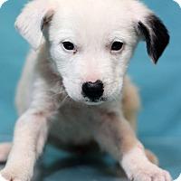 Adopt A Pet :: Raleigh - Waldorf, MD