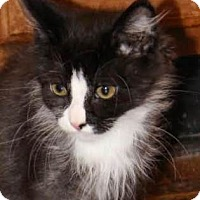 Adopt A Pet :: Chippie - Walworth, NY