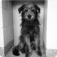 Adopt A Pet :: Ranger - Baltimore, MD
