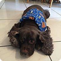 Adopt A Pet :: Carlos - Cape Coral, FL