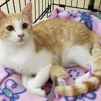 Adopt A Pet :: Pixie - Beaumont, TX