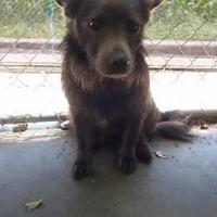 Adopt A Pet :: Bandit - Kinston, NC