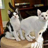 Adopt A Pet :: Enso & Saroo - Melbourne, FL