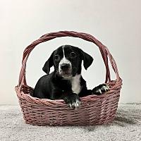 Adopt A Pet :: Glenda - Joliet, IL