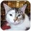 Photo 1 - American Shorthair Cat for adoption in Waynesburg, Pennsylvania - Lulu