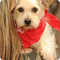 Adopt A Pet :: Dave - Milan, NY