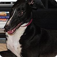 Adopt A Pet :: WSS Zeus