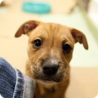 Adopt A Pet :: Moshi - New York, NY
