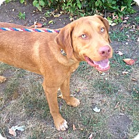 Adopt A Pet :: Jackson in CT - Manchester, CT
