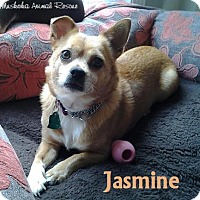 Adopt A Pet :: Jasmine - Adopted December2016 - Huntsville, ON