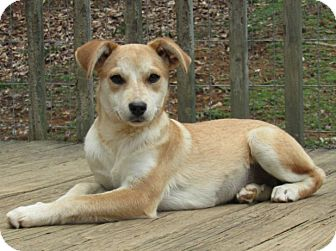 Mixed Breed (Small) Mix Dog for adoption in Spring Valley, New York - leia