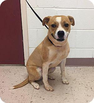 Terrier (Unknown Type, Medium) Mix Dog for adoption in McDonough, Georgia - Sabine