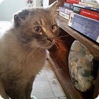 Adopt A Pet :: Mr. Sam - Hinton, AB