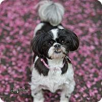 Adopt A Pet :: Jenni - Drumbo, ON