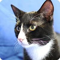 Adopt A Pet :: BW - Winston-Salem, NC