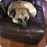 Adopt A Pet :: Bruno - Lawrenceville, GA