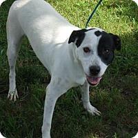 Adopt A Pet :: Lillie - Manchester, TN