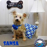 Adopt A Pet :: Sansa - Arcadia, FL